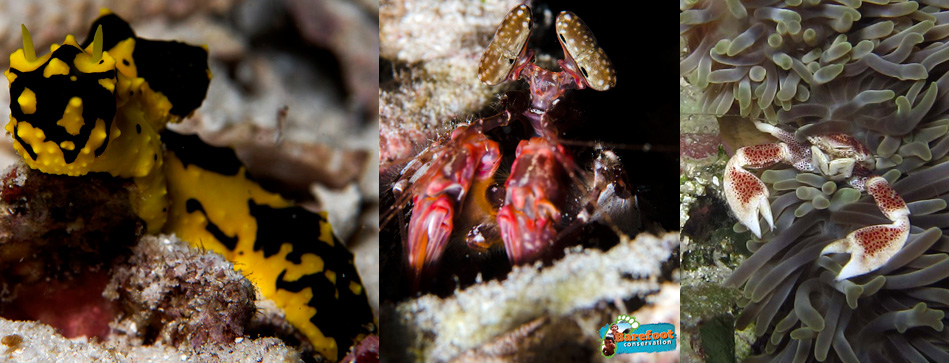 nudi-shrip-crab-blog-sml
