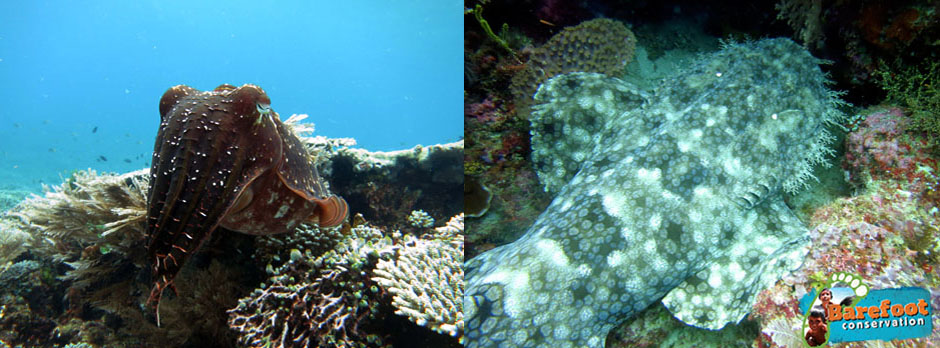 wobbegong-cuttlefish-blog-wm